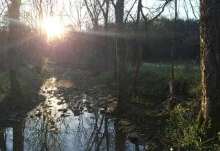 Fox Creek Farm