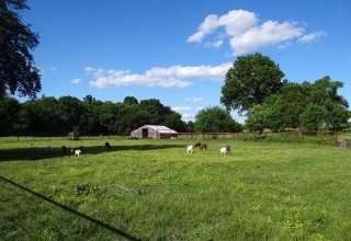 BWD Ranch