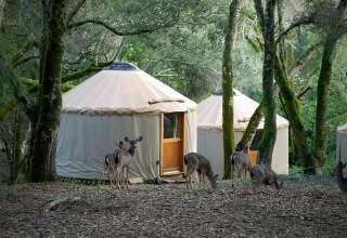 Lupin Lodge's Land