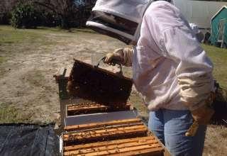 The Good Karma Honey Bee BnB