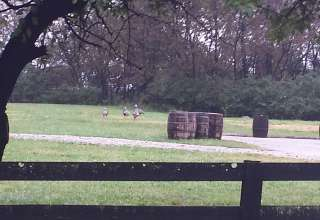 Wildcat Creek Farm in Tyrone