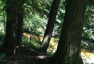 Bear Lake Meets da Yellow Dog