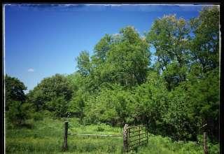 Woods Crossing