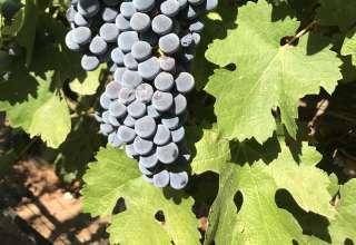 Miramont Estate Winery