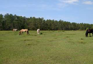 Horse Branch
