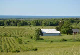 Donna E.'s Land
