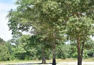 Peaceful Pines RV Park