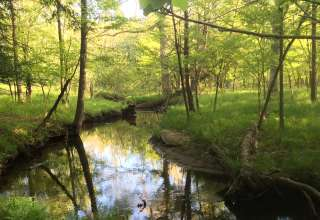 Lynx Run Wilderness Retreat