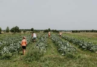 Mean Green's Farm