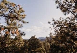 Santa Fe Treehouse Camp