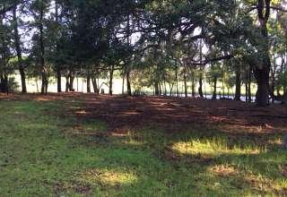 Hanscombe Point Plantation