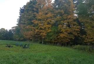 Archdale Meadows