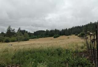 Healing Ponds Farm