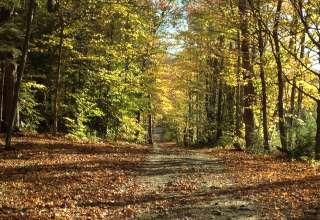 Sugar Wood Meadow Camping