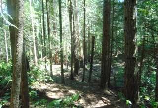 sol duc rainforest retreat