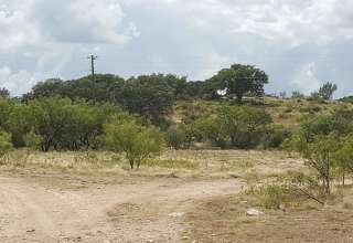 Polly V.'s Land