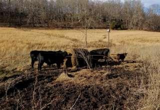 Lazy J Farms