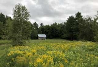 North of Eden Woods