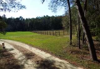Piney Path