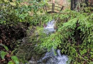 Magic Redwood Gulch