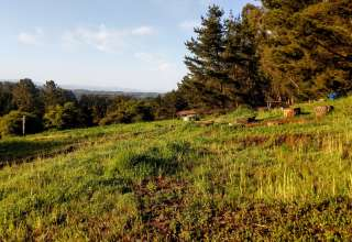 Aromas Hills
