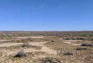 Farmer Brown's Area 51