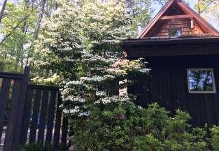 Sassafras Cottage Off-Grid
