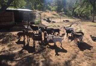 Nana's Ranch