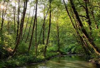 East Creek Forest Art Retreat