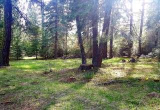 Sasha M.'s Land