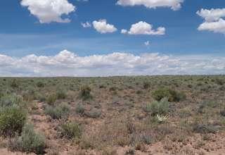Janice H.'s Land