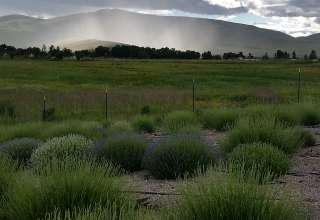 Rosalie Ranch