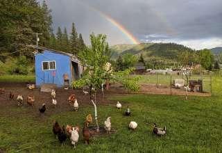 Rainbow Gulch Farm