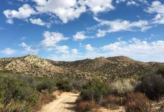 Mike's Desert Oasis