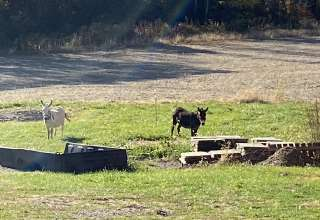 Pleasant Valley Farm Camp