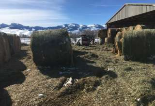 Montana Red Devon Ranch