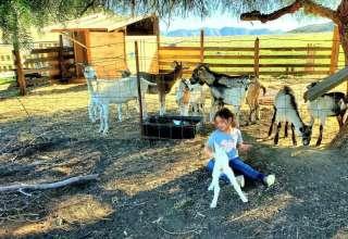 Owlbee Farm