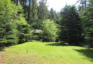 Four Acre Woods