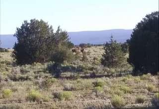 Bear Creek Ranch & Rabbitry