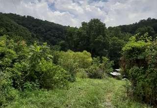 Treely Your's Farm