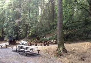 Grace E.'s Mini Forest