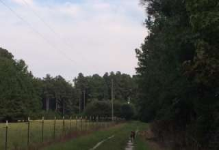 Stephen's Branch Farm