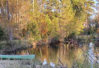 Stephen's Branch Pond View