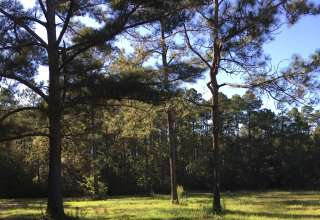 Cynthia's M.'s Land