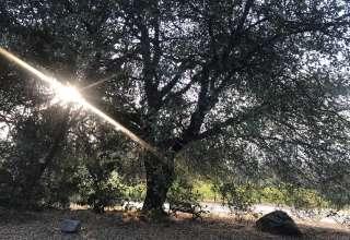 Camp 🏕 Gold Dust Vineyard