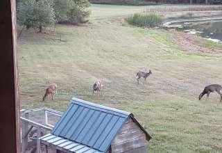 RoNilaVon Farm