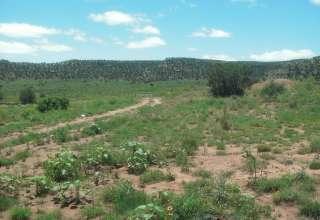 Jim T.'s Land
