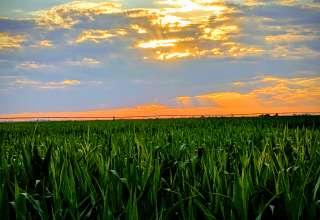 Farmland for Days