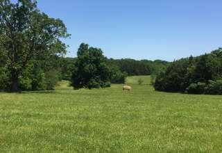 Laura J.'s Land