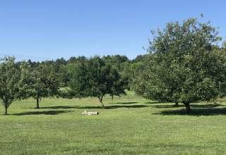 Jane K.'s Land